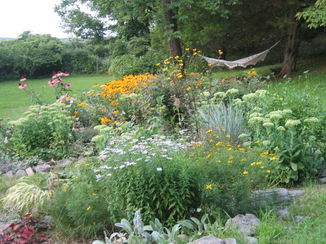 "Late summer: ""Island bed"" with rudbeckia, sedum autumn joy"