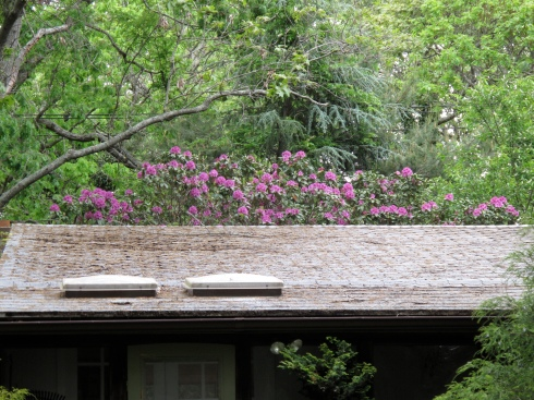 Note the rhododendrons, not the condition of the roof