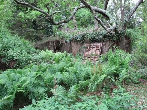 My overgrown Eden