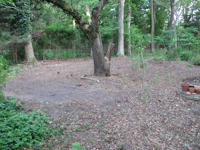 The circle around the cherry tree in the area where the demolished shed used to be, is 30 feet wide. How to transform bare dirt into a circular garden room on a mini budget? Wood chips for starters?